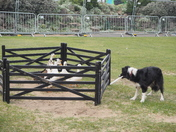 Weston Dairy Festival