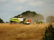 Harvesting in a rush .