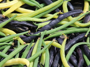 Colourful: French Beans