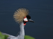 Colouful: Crane