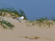 Gull. All Alone