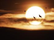Swifts at Sundown