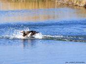 Bird, Ducks and Swans