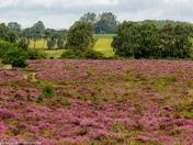 Roydon in Bloom