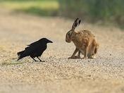 Good morning Mr Hare.