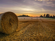 Strumpshaw field 16/08/17