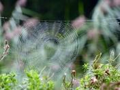 TEXTURE. Cobweb
