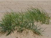 TEXTURE. Sand Dunes