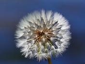TEXTURE. Daisy  Seed Head