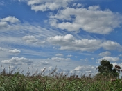 Textures of Clouds and Reeds