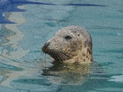 Seal. Keeping Watch