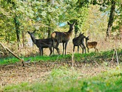 Deer and a Squirrel at Dulverton