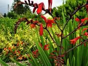 Summertime Bright Flowers