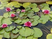 visit to felbrigg hall walled garden