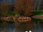 Lidl Pond
