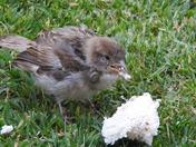 Poor Little Sparrow