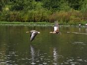 birds in the harrow lodge park