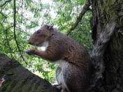 squirrel enjoying peanuts