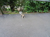 a squirrel in Madeira Walk on Thursday 24th August 2017