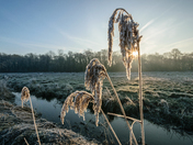 Frozen Seedheads, Perspective