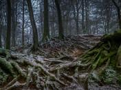 Winter tree roots