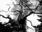 Tree architecture