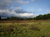 Sutton Heath