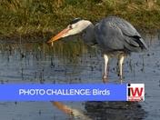 PHOTO CHALLENGE: Birds