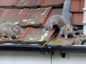 Squirrel squatters