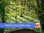 PHOTO CHALLENGE: Trees