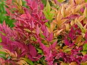Autumn Colour In The Garden Now