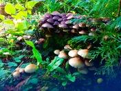 Fungus time