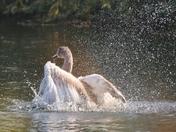 Celebrating with a splash!