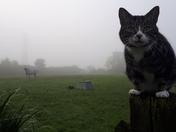 Autumn - season of mists.....