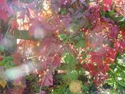 The change of seasons - summer skies, autumn leaves