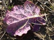 Leaf left behing after harvest, lingering on the autumn earth