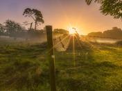 Tacolneston Sunrise