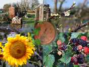 Seasons - the allotment site through the year