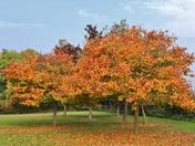 Autumn at Marks Hall Arboretum