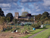 Am Autumn afternoon on the allotment site