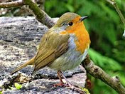 Robin's Rest.