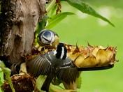 Birds bicker over breakfast.
