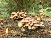 Mini mushrooms.