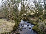 A river on Dartmoor