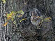 Squirrel Gathering in the Garden