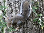 Squirrels sensing DANGER