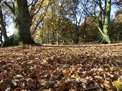 Season:Autumn