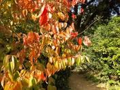 Autumnal Ashcombe.