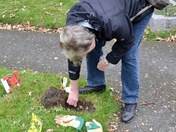 Mass spring bulb planting in Aldborough Hatch