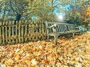 Season of fallen leaves